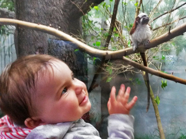 Eloise has a marmoset pal at Prospect Park Zoo!