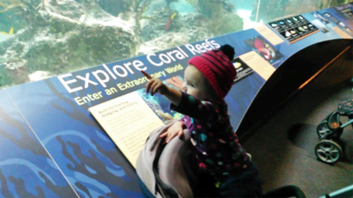 Eloise Loves The New York Aquarium